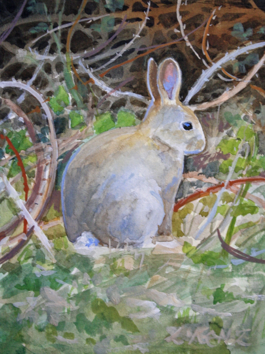 Day 14 ~ The Hare